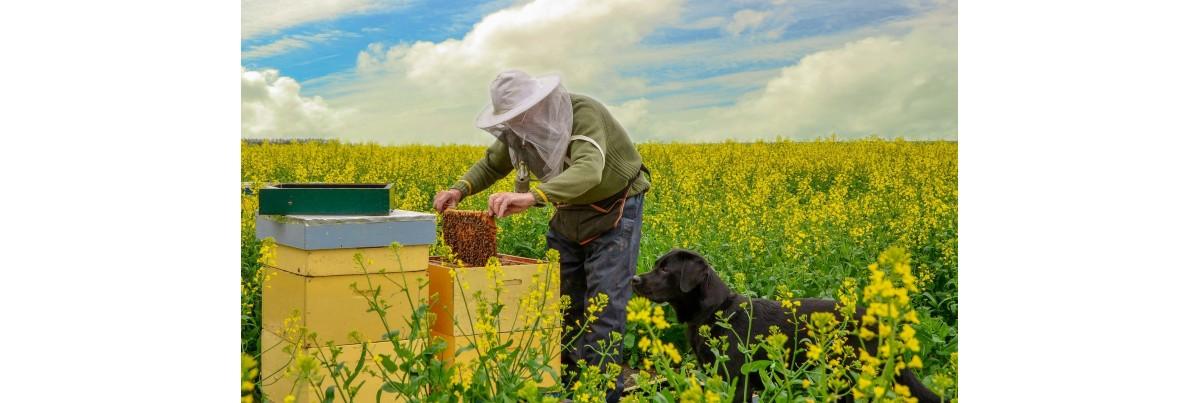 Le travail au rucher
