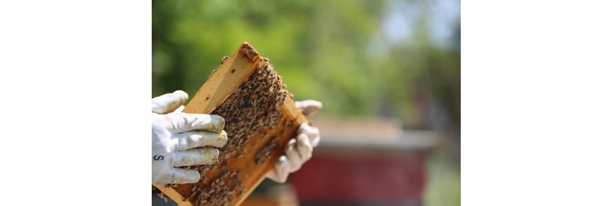 L'entretien de la ruche