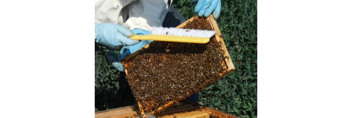 Les outils pour l'apiculteur