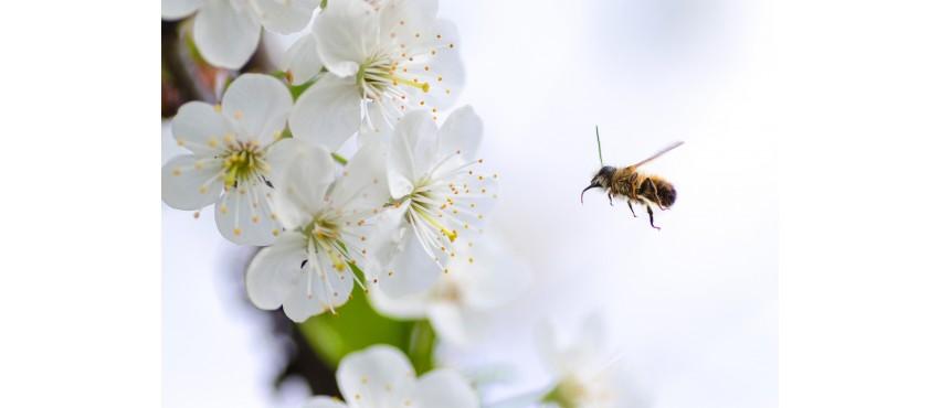 Occitanie : la région où l'abeille est reine